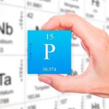 Макроелементи в організмі людини – Фосфор